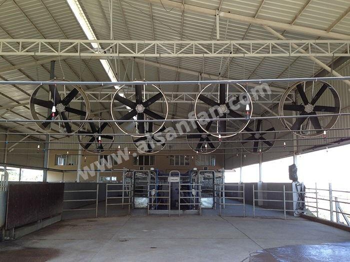 Çiftlik Süt Sağım Tavan Vantilatörleri, Çiftlik Süt Sağım Tavan Fanları Uygulaması